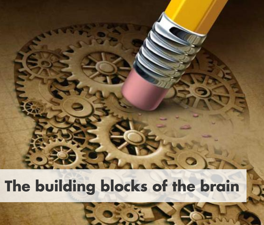 Pint of Science: The building blocks of the brain