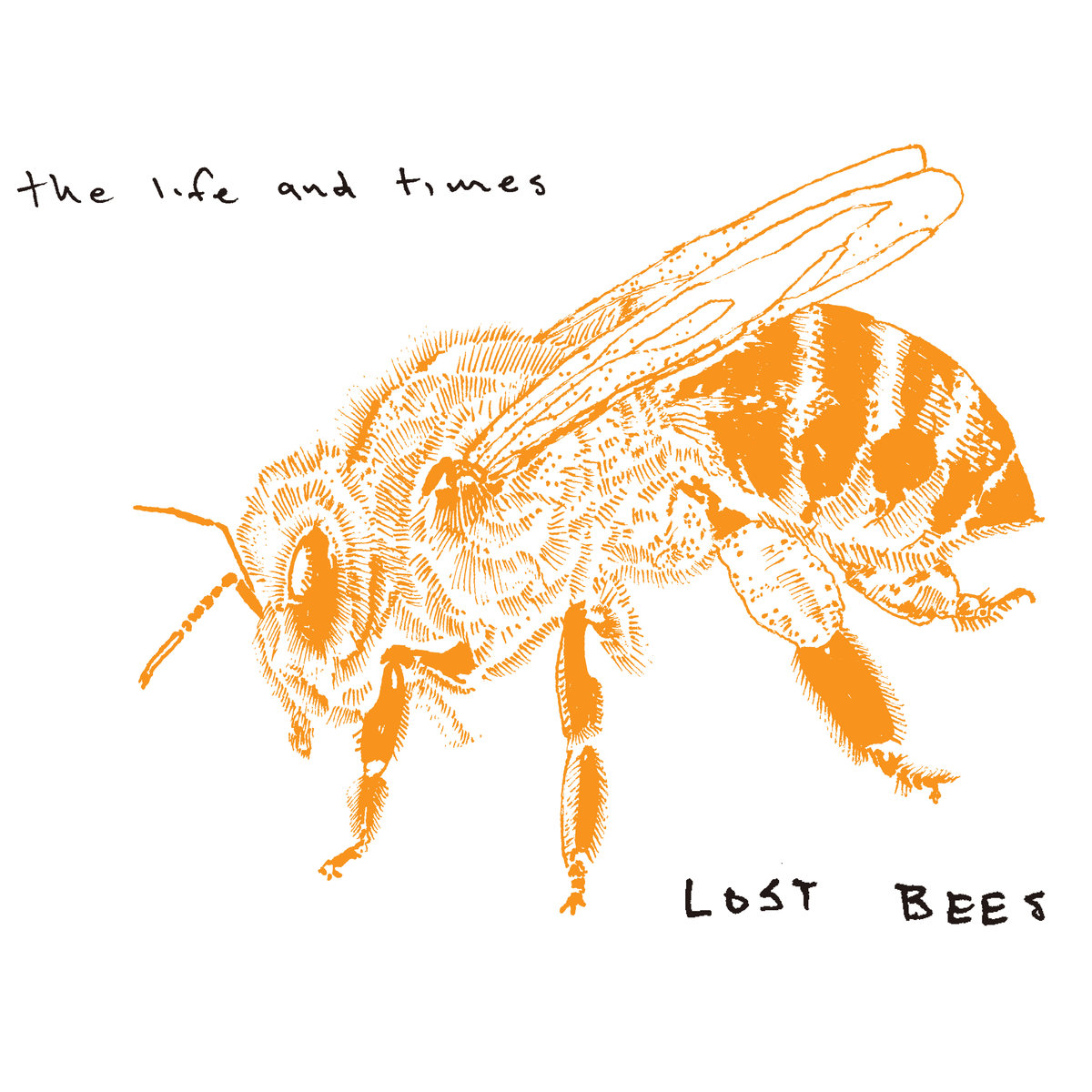 Lost Bees - The Life and Times